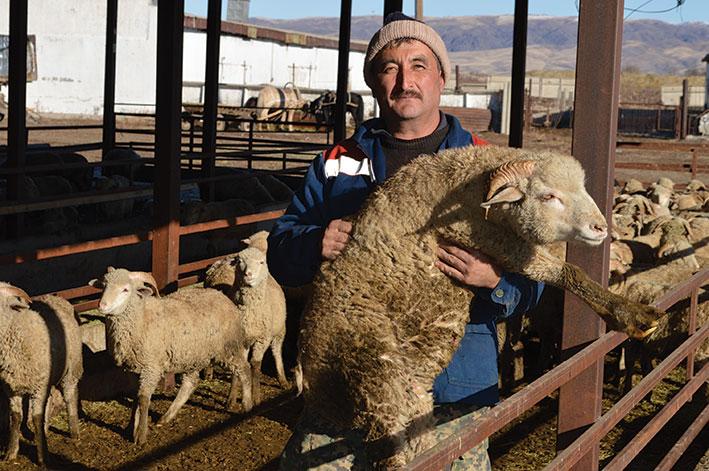 И молоко перерабатывают, и овец откармливают