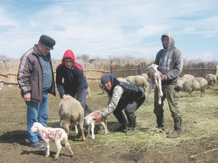 Пополняются отары овцеводов