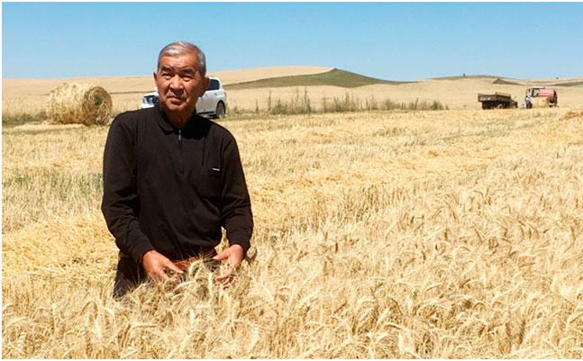 Богара Уйгентаса бьет все рекорды по урожайности