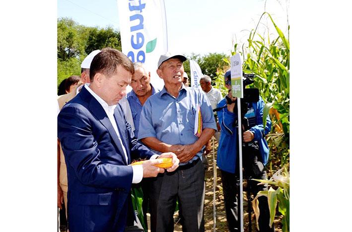 Кукурузы большой потенциал