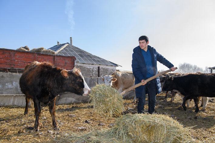 24 коровы 24- летнего Ершата (+ видео)