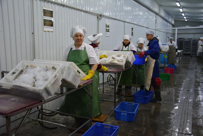 Рыбные деликатесы от ТОО «Golden fish»