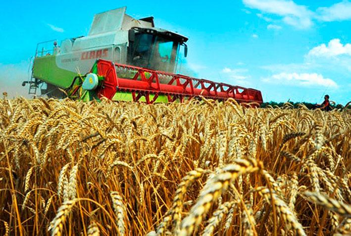 Для обеспечения внутреннего потребления страны и экспорта в Казахстане имеется достаточный объем зерна – МСХ